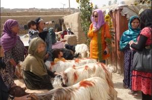 Carla Dazzi alla consegna delle capre alle vedove africane (ph Insieme si può)